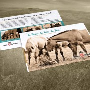 Equine Reflection, Promotional Postcard